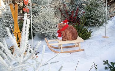 Les marmottes font de la luge cours Jonville à Granville pour les fêtes 2019.