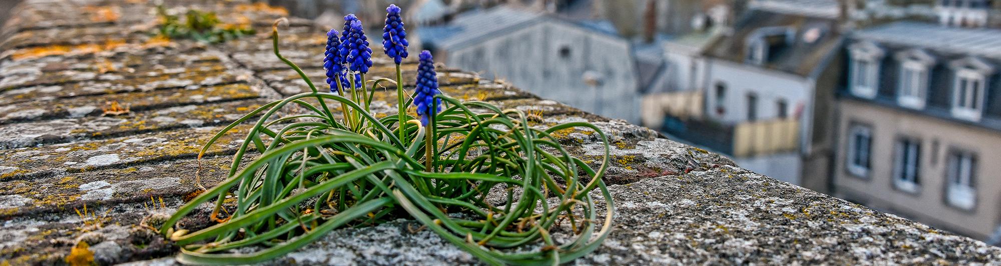 Développement durable. ©Benoit.Croisy - Coll.Ville de Granville.