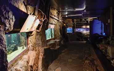 Plus de 300 espèces aquatiques composent l'établissement situé au Roc de Granville