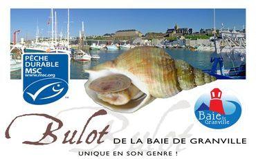 Bulot, baie de Granville