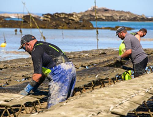 À la découverte de l'élevage d'huîtres bio de Chausey de Lenoir Thomas
