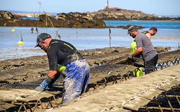 Lenoir-Thomas élève des huîtres bio à Chausey.©Benoit.Croisy